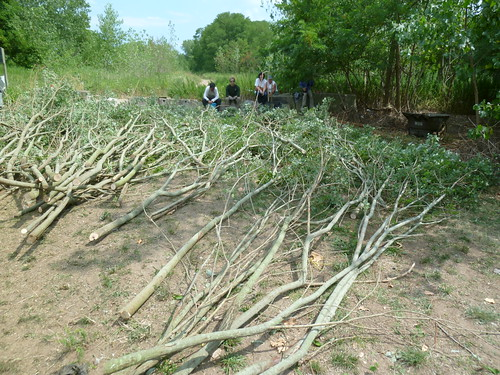 Harvesting Woody Material for Patrick Dougherty Installation | by Brooklyn Botanic Garden