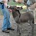 Baby Donkey 2
