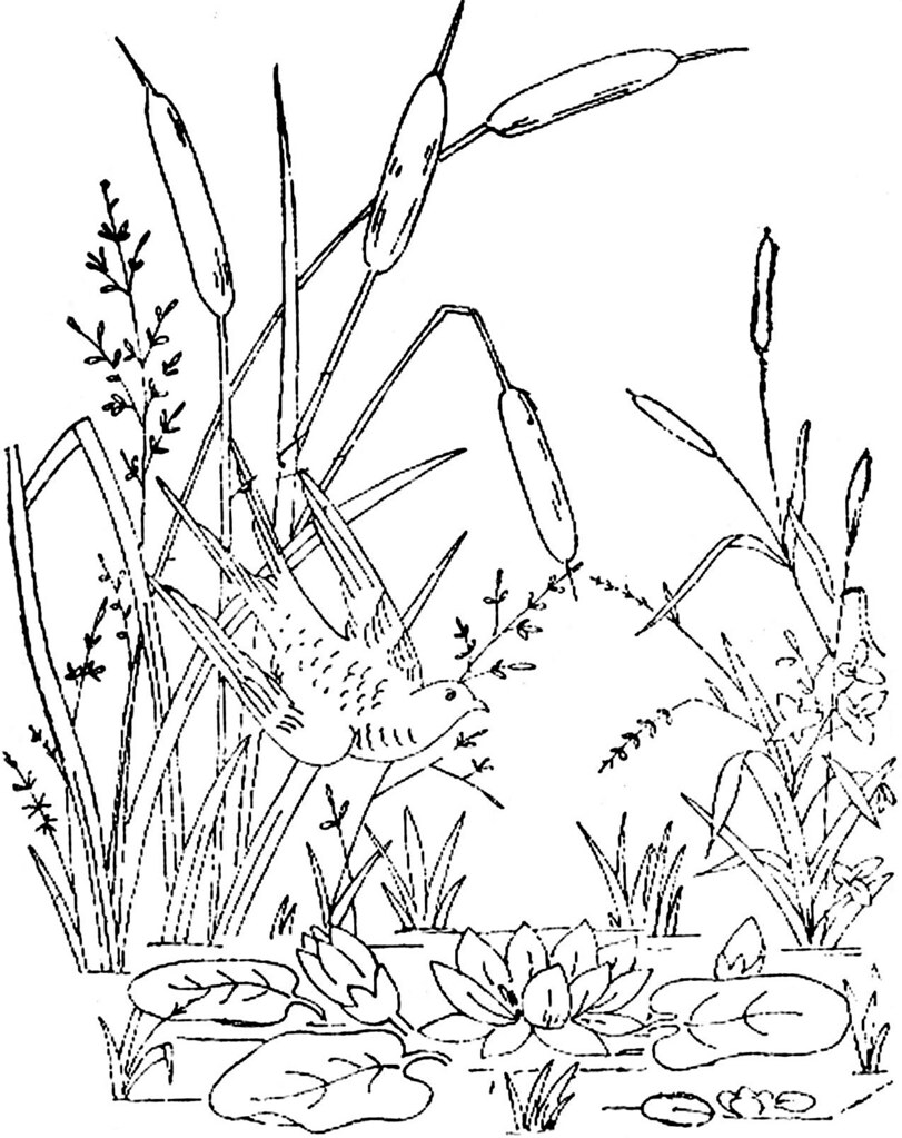 free printable coloring pages cattails plants   1886 Ingalls Bird in Cattails   This came from ...