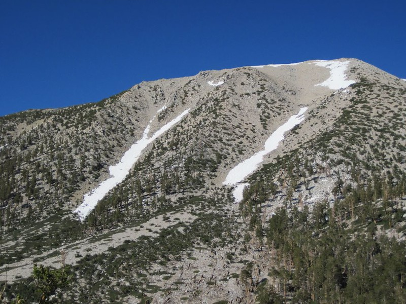 San Gorgonio Mountain and several snow-chutes from the North Fork Meadows Trail