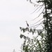 Great Blue Heron on South Fraser Witness Trail