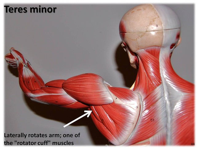 College anatomy study games