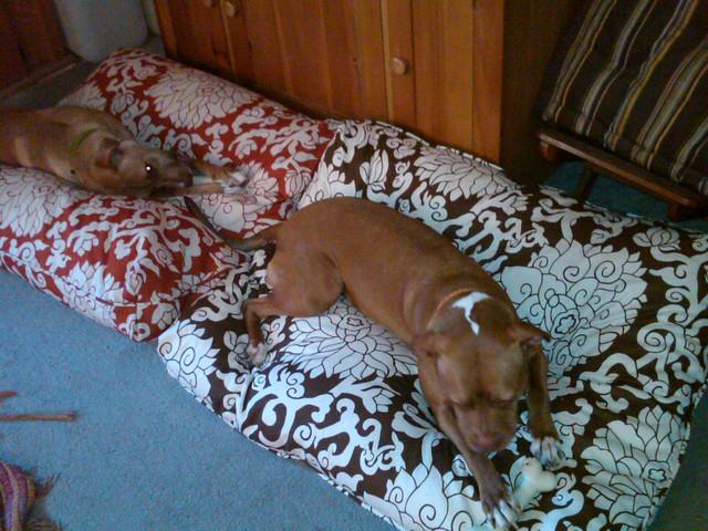Madison Mutts Dog Rescue