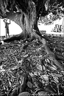 ficus | by Lella Leone Photo
