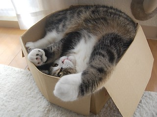 Maru (Give This Video A Chance) | by I Flickr 4 JOY