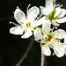 Spring 2010 Cherry Blossom