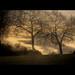 alberi #16 Explore