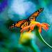 Butterflies-210