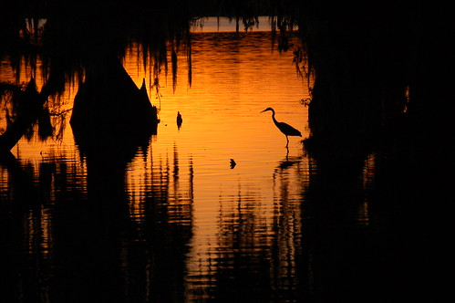 Sunset in Cypress Island Swamp on Lake Martin, LA. | by jc.winkler