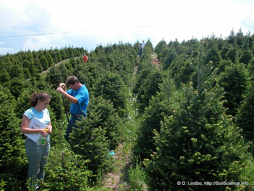 Christmas Tree Production (1) | by SoilScience.info