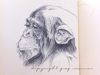 Chimp Study | by greg.newman