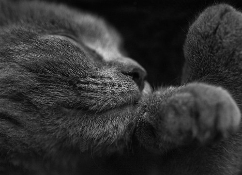 sleeping boxer (f/2.8 @100mm,iso 1250,canon5d) | by afewdayslate :)