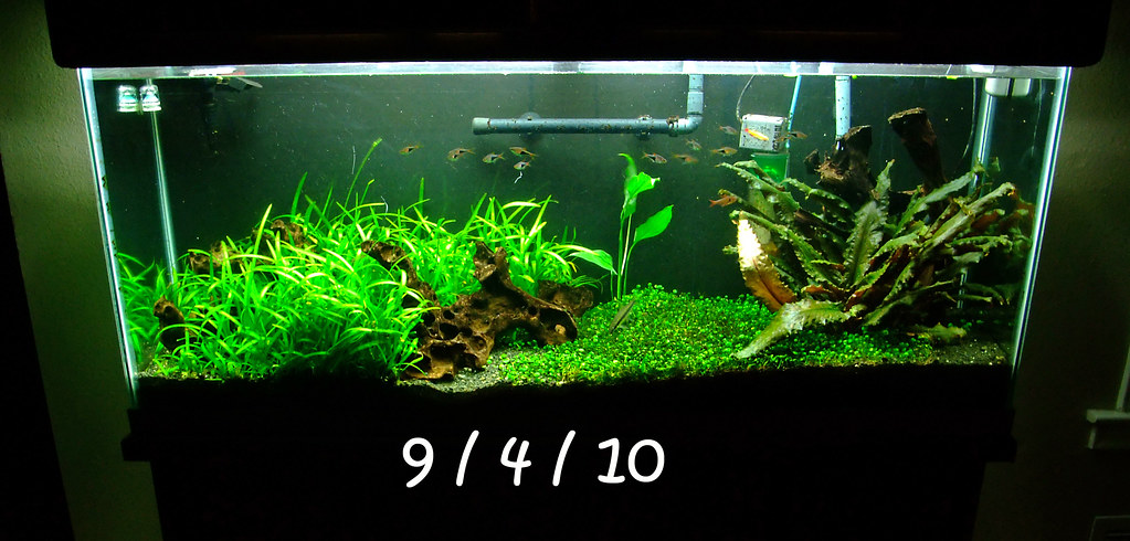 55 gallon planted aquarium a few months back i removed for 55 gallon fish tank lid