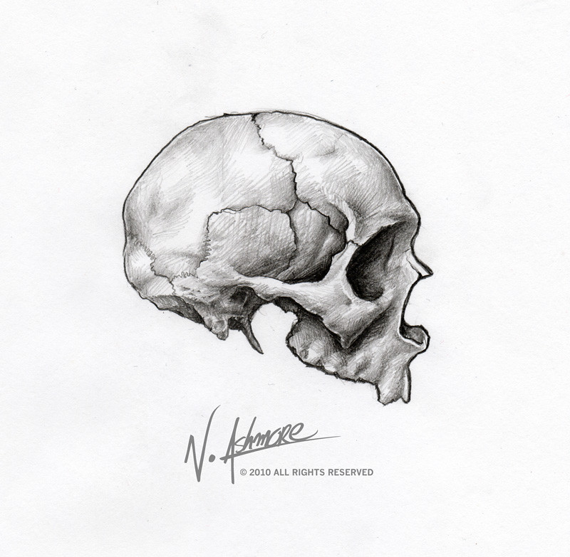 skull-sketch-side-view | ashmorearts | Flickr
