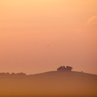 Paraglider above hazy Sunset Trees | by J e n s
