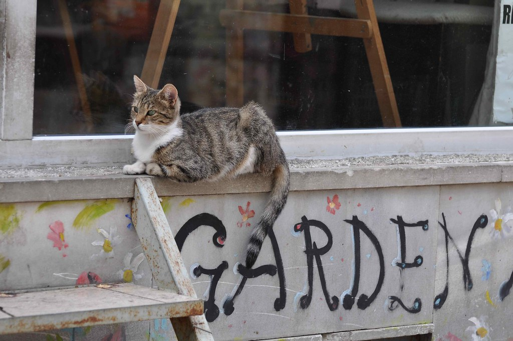 Garden Cat   by LaValle PDX
