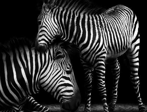 real black&white | by phelsumar