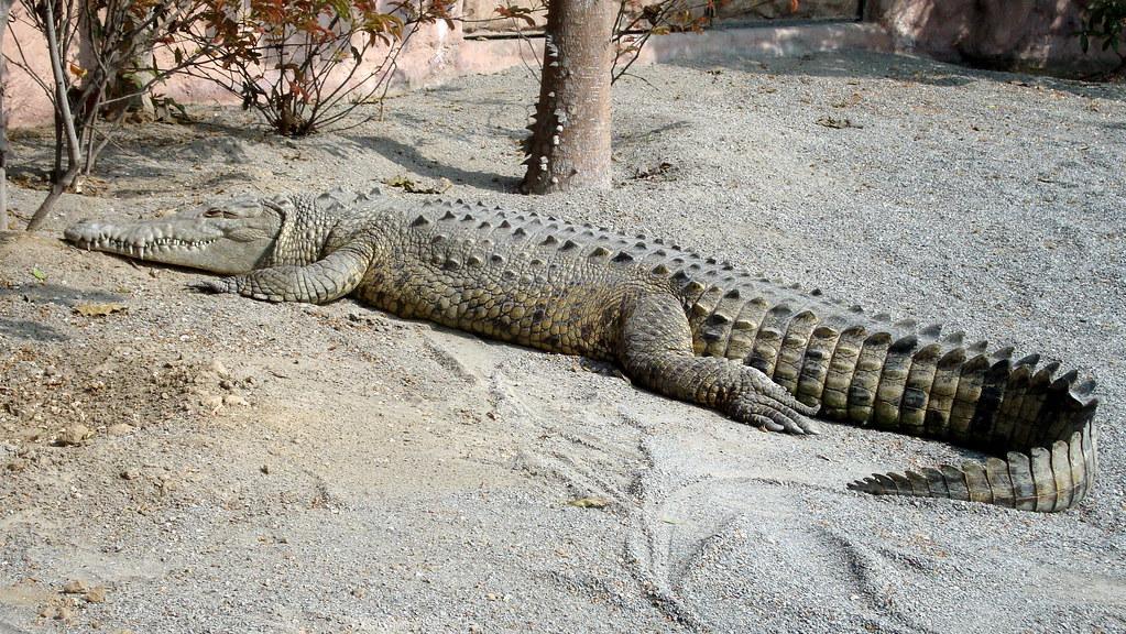 Resultado de imagen para zoologico de cocodrilos en tumbes