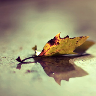 """leaf"" it 