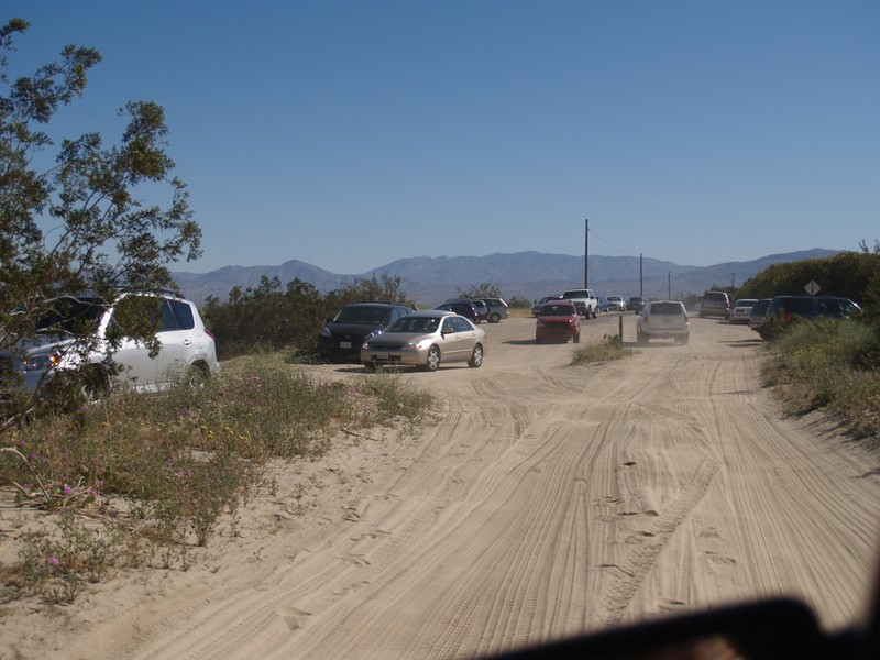 Hordes of wildflower-seeking tourists where the pavement ends on Digiorgio Road in Borrego Springs