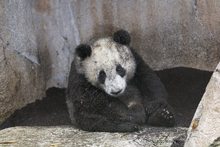 Yun Zi:  Please don't let Momma see me, I wasn't supposed to get dirty | by Rita Petita
