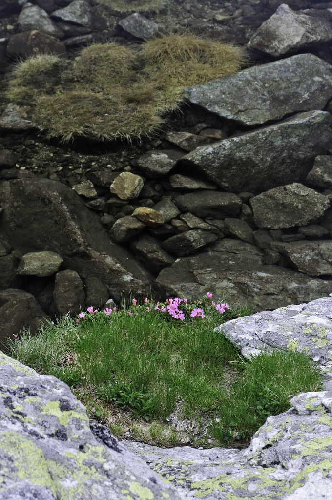 Patch Of Grass And Red Pink Violet Flowers Near Water