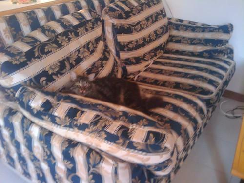 spock adagiato sul più brutto divano mai concepito dalluo ...