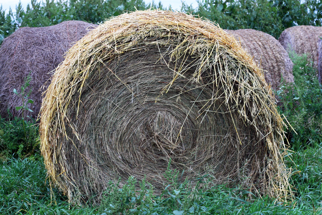 Oat straw wrapped alfalfa hay bale | I got a chuckle out ...