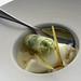 cilantro cream, yogurt ice cream, pear jelly