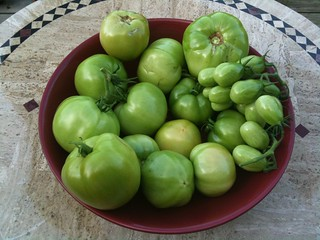 Green tomato harvest | by Krista76