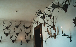 antlers | by silver_neon