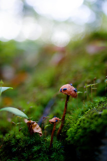 fungus1 | by Atheist_Lenses