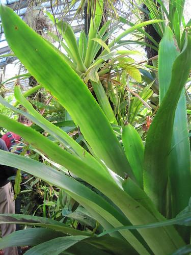 Jardin des plantes de Nantes - Plantes dans l'aile est du ...