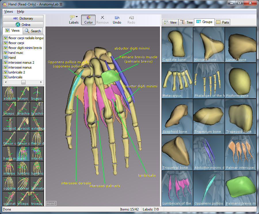 3 D Human Anatomy Software 3 D Human Anatomy Software Flickr