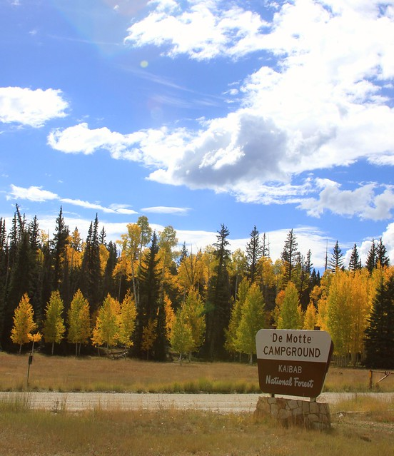 Camping Cabins National Forest Nm: DeMotte Campground In The Fall, North Kaibab Ranger