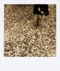 Fall on PX 600 by heinisch