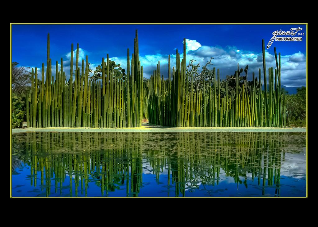 Jardin botanico oaxaca giovany arturo gonzalez desales for Jardin oaxaca