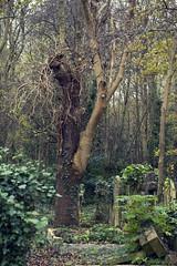 Fascinating tree