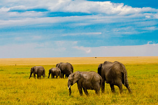 Elephants on the Mara. | by ahpook667