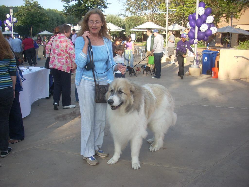 Dog Day Afternoon  West Armitage Avenue Elmwood Park