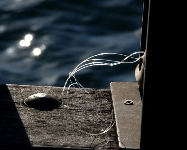 Fishing line at woody point flickr photo sharing for Fishing line camera
