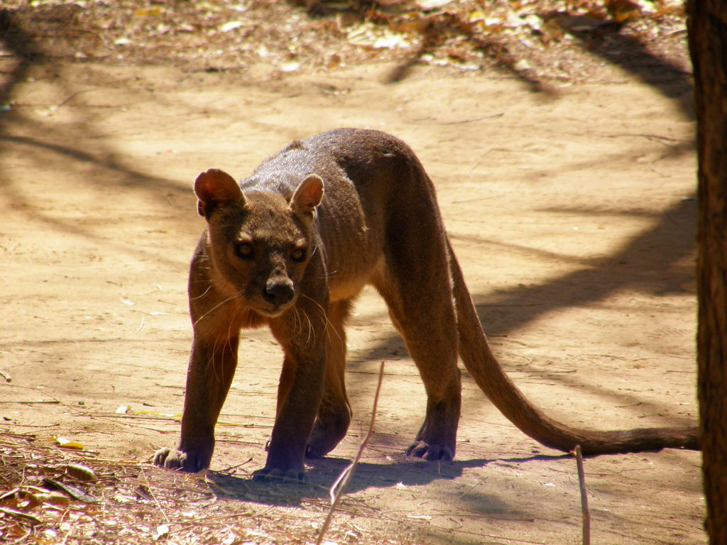 Wild Animal That Looks Like A Dog