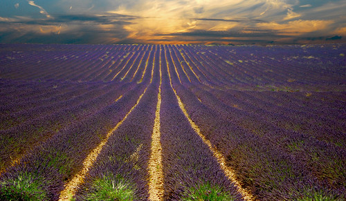 A Lavender Sunset [Oh what a Re-post!] | by Vainsang