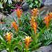 Polynesian Flowers