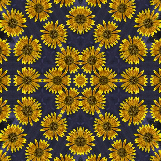 The gallery for --> White Sunflower Wallpaper Tumblr