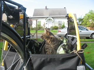 bike trailer cat | by MargaretHall