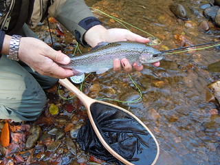Fly fishing near Brevard | by Red House Inn