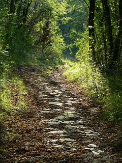 Bagno a ripoli strada romana nel bosco al di sopra del flickr - Nuovo ranch bagno a ripoli ...
