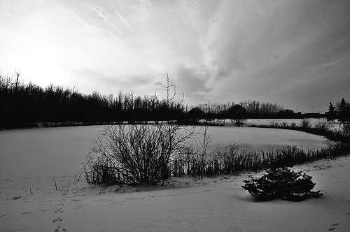 Winter in Black & White | by Stella Blu