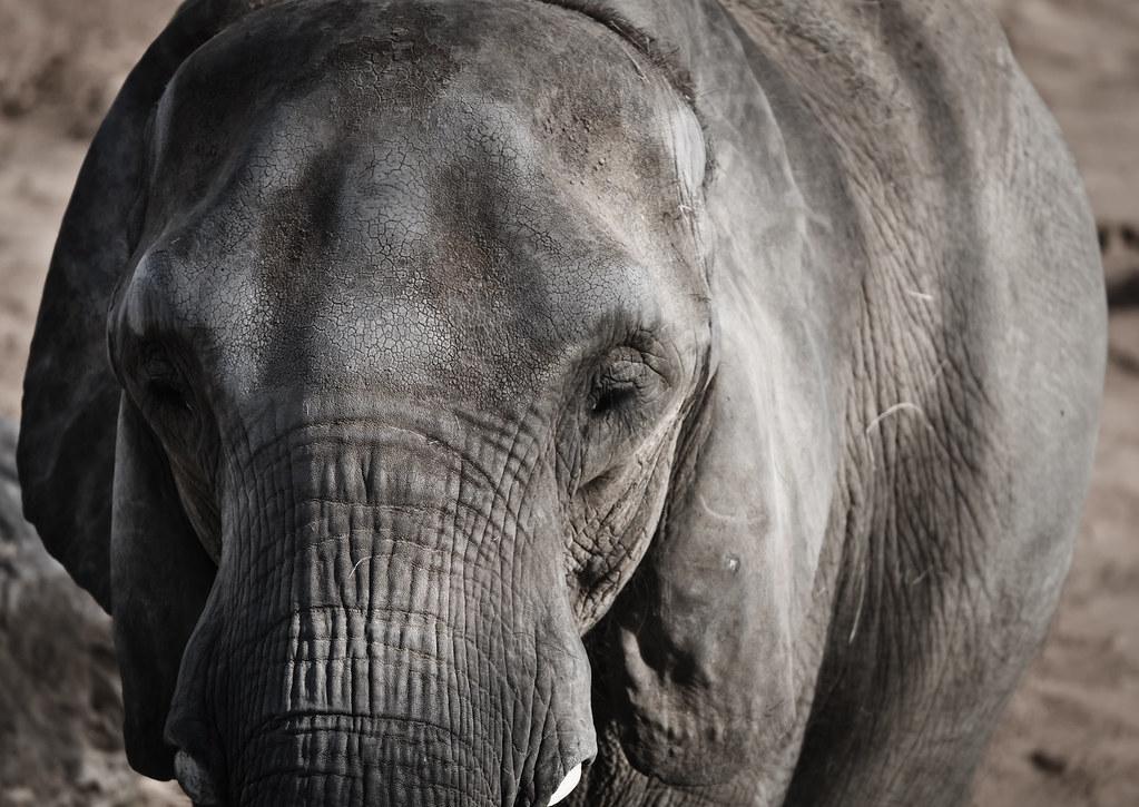 Sad elephant barcelona zoo micema flickr for Elephant barcellona